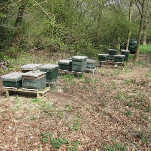 Nederlandse Bijenvereniging, afd. Velsen